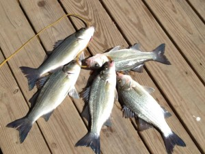 Fishing: a line and a lure