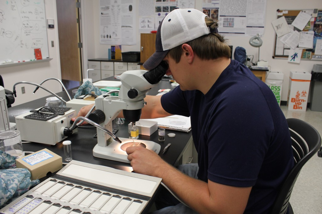 Student Leland Shockley dissecting a mosquito under a microscope. Photo by April Alexander.