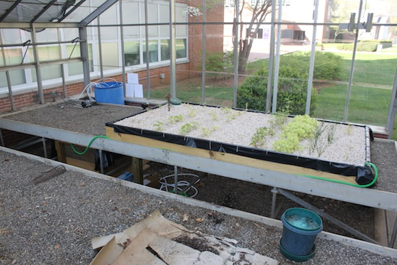 The aquaponics system consists of a gravel bed containing plants and a water tank filled with fish.  Photo by Ben Haines.