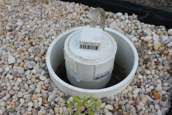 This filter cleans the water in the gravel bed so it can be recirculated into the fish tank.  Photo by Ben Haines.