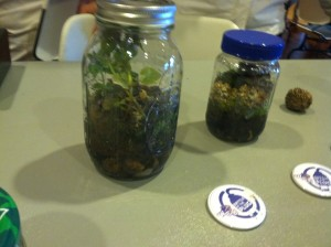 Tiny ecosystems in jars presented by ECOCats. Photo by Jessica Swink